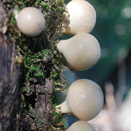 by Ivan Marjanovic - Nature Up Close Mushrooms & Fungi