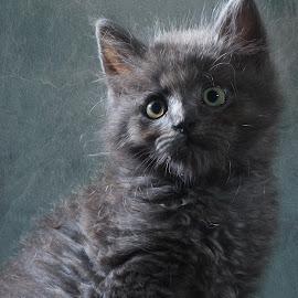 by Fabb Winter - Animals - Cats Kittens ( bébé, cats, kitten, baby, cute,  )