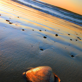 Seashells at sunrise by Sherrie Haber - Nature Up Close Other Natural Objects ( shore, shell, sand, seashell, beach )