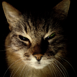I know by Jurijs Ratanins - Animals - Cats Portraits ( look, mobilography, cat, pet, portrait )