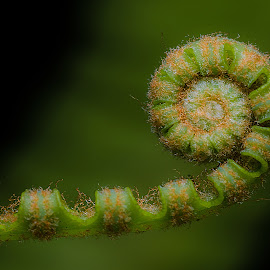 Fern II by Jali Razali - Nature Up Close Leaves & Grasses (  )