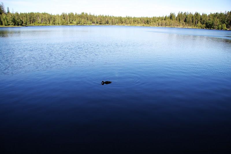 北欧掠影-其实我是去开会的 - lhapple403 - lhapple403的博客