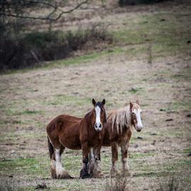 by Brian Baker - Animals Horses