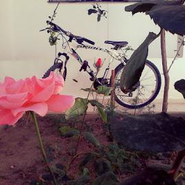 by Teycir Zayani - Transportation Bicycles