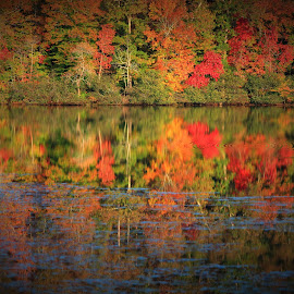 Fall on Chanoa Lake, Bell County Ky by Paul Mays - Landscapes Waterscapes