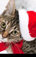 Screenshot of Christmas Cat Live Wallpaper