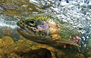 Screenshot of American Fly Fishing
