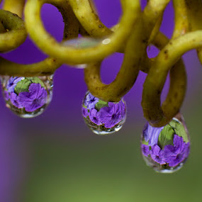 purple by Charlie Rosadi - Abstract Water Drops & Splashes