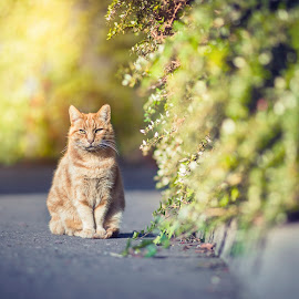 Garfield by Libor Klímek - Animals - Cats Kittens ( cat, nikon, sunlight, garfield, bokeh,  )