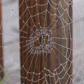 by RichandCheryl Shaffer - Nature Up Close Webs (  )