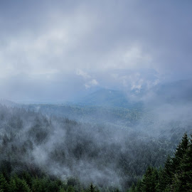 Ghosts by Bogdan Merluşcă - Landscapes Forests ( mountains, nature, tree, wide angle, trees, romania, forest, landscape, bucegi )