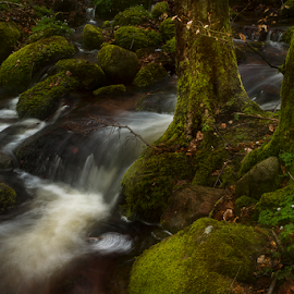 Creek in flowmotion by Peter Samuelsson - Nature Up Close Water ( water, stream, tree, creek, moss, stone, flow, icm )