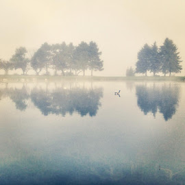 lone goose by Brittany Todd - Instagram & Mobile iPhone ( bird, reflection, park, canada goose, fog, sunrise, morning, mist )