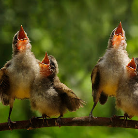 happy song by Alonk's Roby - Animals Birds (  )