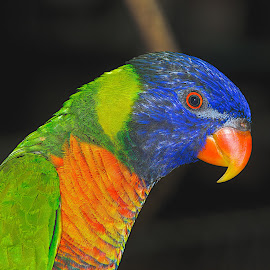 by Roger van Zandvoort - Animals Birds ( raw )