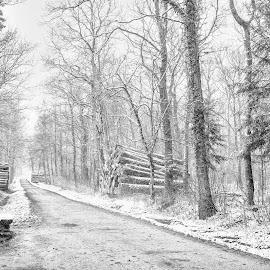 First snow by Radu Eftimie - Landscapes Forests ( versoix woods, snow, trees, switzerland )