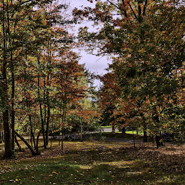 Fall in Copake NY by Diane Clontz - Novices Only Landscapes ( home, peaceful, vacation, fall colors, new york )