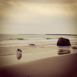 Lucy Vincent Beach by Rachael Dawn - Animals - Dogs Running