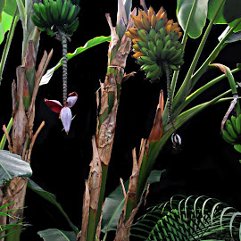 Bananas by Lia Ribeiro - Food & Drink Fruits & Vegetables