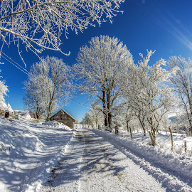Winter time by Marius Turc - Nature Up Close Trees & Bushes