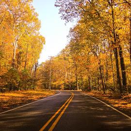 by Vishal Bhatnagar - Nature Up Close Trees & Bushes ( fall, color, colorful, nature )