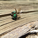 Metallic green bee?