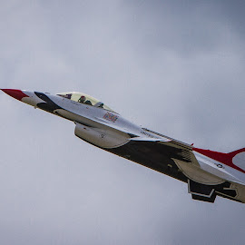 Thunderbird by Nicole Nichols - Transportation Airplanes ( thunderbird, airplane, f16, usaf, jet )