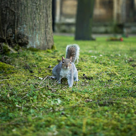 Wild & Free by Russell Dixon - Animals Other ( canon, wild, animals, shallow, wildlife, depth, coventry, field, free, tree, sigma, bush, cathedral, squirrel, animal )