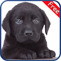 Labrador Retriever+ Free icon