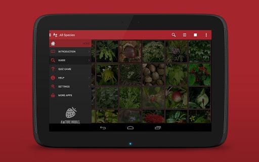 Wild Berries and Herbs 2 PRO - screenshot