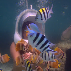 Feeding fish while helmet diving by Sarah Jewell - Animals Fish
