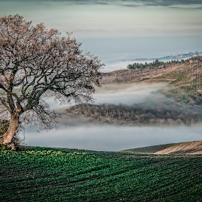 mist.... by Frans Scherpenisse - Landscapes Mountains & Hills ( hills, tree, green, oak, landscape, mist )