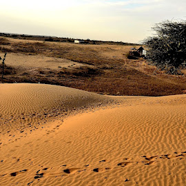 .. on the sands of time by Vidur Jyoti - Landscapes Deserts ( undulations, footprints, dunes, desert, trees )