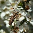 Unidentified Longicorn beetle