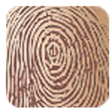 Fingerprint scanning life quer icon