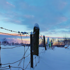 Snowy Sunset by Mariah Lumley - Landscapes Weather ( clouds, farm, fence, sunset, snow,  )