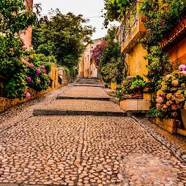 flower street by Eseker RI - City,  Street & Park  Street Scenes (  )