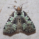 Marbled-green Leuconycta