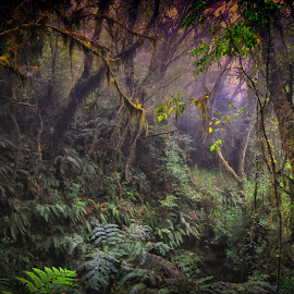 lost in the forest by Phil Robson - Landscapes Forests ( lost, green, forest, dense, evening )
