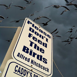 The Hunger by Jared Lantzman - Instagram & Mobile iPhone ( scary, sign, alfred hitchcock, feed, beach, birds, horror,  )