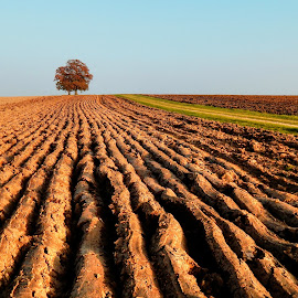 by Nenad Milic - Landscapes Prairies, Meadows & Fields