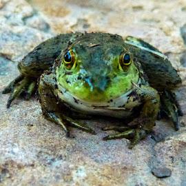 Kiss Me by Jax Welborn - Animals Amphibians ( picsbyjax )