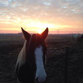 by Bobby Hudson-Schnarr - Animals Horses