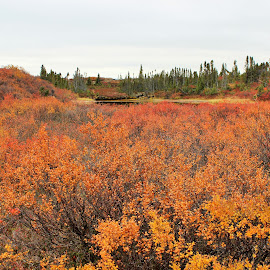 Fall colors in Nunavut, Canada by Amy Bundenthal Johnson - Landscapes Prairies, Meadows & Fields (  )