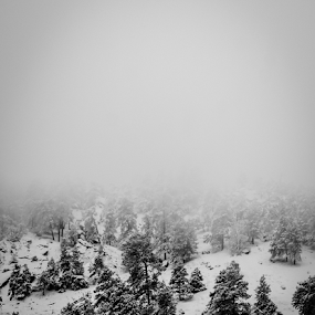 Forest into fog by Steve Outing - Black & White Landscapes ( foggy, fog, snow, colorado, cloudy, trees, forest, boulder,  )