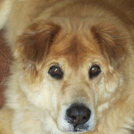 My Big Dog by Marcia Taylor - Novices Only Pets (  )