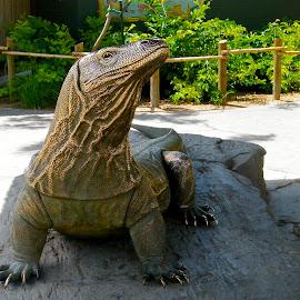Komodo Dragon  by Donna Probasco - Novices Only Objects & Still Life (  )