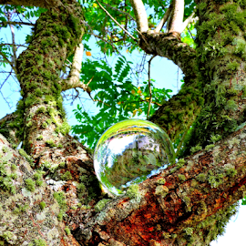 Water droplet in a tree by Elfie Back - Artistic Objects Glass (  )