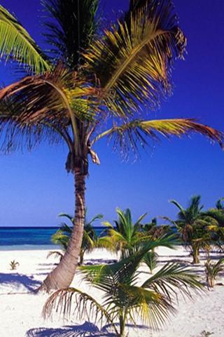 3 차원의 여름 해변
