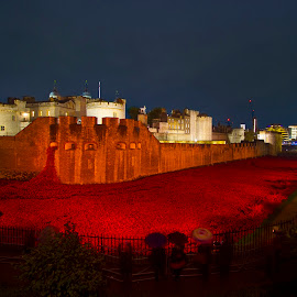 Poppies Tower of London night   by David French - News & Events World Events ( whsukltd, ww1, graves, bw, ceramic, whsuk ltd, remembrance day, medway, 11, poppy day, wall art, cenotaph, army, collage, royal air force, poppies, remembrance, flowers, ceramic poppies, 11 november, royal navy, war memorial, tower of london, memorial, flags, royal standards, kent, tower, red, soldiers, london, red poppies, gillingham, moat, chatham war memorial, night, navy )